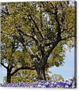 Trees And Flowers Acrylic Print