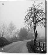 Trees And Fog Acrylic Print
