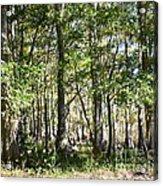 Trees And Knees Acrylic Print