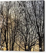 Trees And Late Afternoon Light Acrylic Print