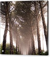 Trees And Mist Acrylic Print