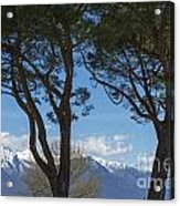 Trees And Snow-capped Mountain Acrylic Print