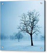 Trees And Snow In Fog, Toronto, Ontario Acrylic Print