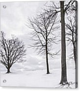 Trees And Snow Acrylic Print
