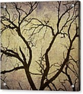 Trees Are The Lungs Of The World Acrylic Print