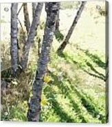 Trees At A Picnic Acrylic Print