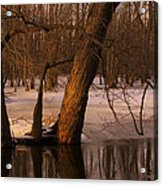 Trees At Collins Creek Acrylic Print