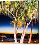 Trees At Night Acrylic Print