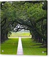 Trees At Oak Alley Plantation Acrylic Print