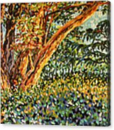 Trees At Sunset In Lafayette Park Acrylic Print