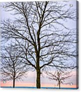 Trees At The Boardwalk In Toronto Acrylic Print by Elena Elisseeva