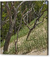 Trees At The Edge Of A Dune At Silver Lake Acrylic Print