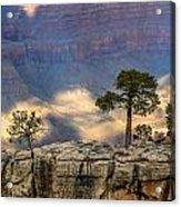 Trees At The Grand Canyon Acrylic Print