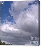 Trees Below The Clouds Acrylic Print