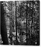 Trees Bw Acrylic Print