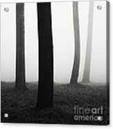 Trees Dancing In The Fog Acrylic Print