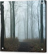 Trees During Autumn In Forest, Dupage Acrylic Print