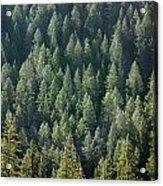 1a9502-trees Lit Up, Wy Acrylic Print