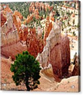 Tree's Eye View Acrylic Print
