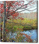 Trees In A Forest, Damariscotta Acrylic Print