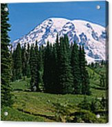 Trees In A Forest, Mt Rainier National Acrylic Print