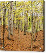 Trees In A Forest, Stephen A. Forbes Acrylic Print