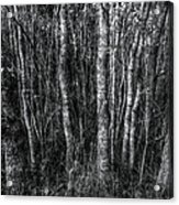 Trees In Black And White Acrylic Print