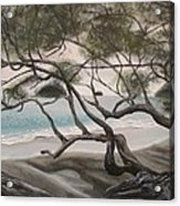 Trees In Costa Rica Acrylic Print
