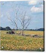 Trees In Field Acrylic Print