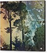Trees In Golden Gate Park Acrylic Print