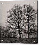 Trees In November Acrylic Print