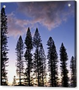 Trees In Silhouette Acrylic Print
