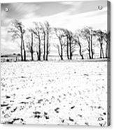 Trees In Snow Scotland Iv Acrylic Print by John Farnan