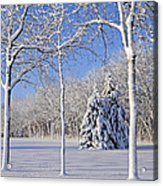 Trees In Snow  Wisconsin Acrylic Print by Anonymous