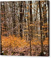 Trees In The Forest In March With Orange Leaves Acrylic Print