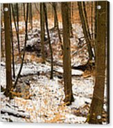 Trees In The Forest In Winter Brown And Orange Leaves Acrylic Print