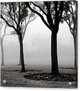 Trees In The Midst No. 06 Acrylic Print