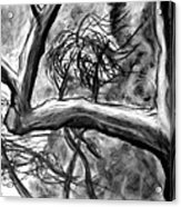 Trees In The Wind Acrylic Print