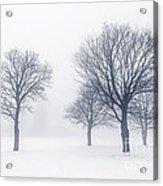 Trees In Winter Fog Acrylic Print