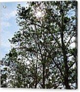 Trees At The Park Acrylic Print
