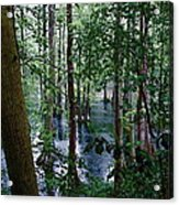Trees Acrylic Print by Nelson Watkins