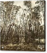 Trees Of Ashburn Acrylic Print