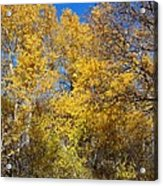 Trees Of Color Acrylic Print