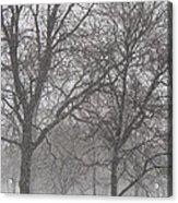 Trees Of Silence Acrylic Print
