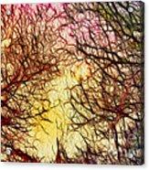 Trees Of The Four Seasons Acrylic Print