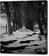 Trees Of The Ida Valley  Acrylic Print