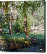 Trees Of The Rainforest Acrylic Print