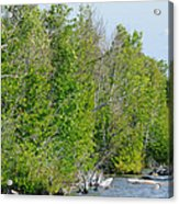 Trees On A Lakeshore Acrylic Print