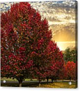 Trees On Fire Acrylic Print