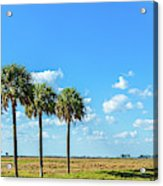 Trees On Landscape, Florida, Usa Acrylic Print